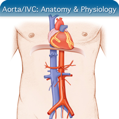 Online Ultrasound Course for Aorta/IVC: Anatomy & Physiology Module