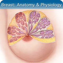 Online Ultrasound Course for Breast: Anatomy & Physiology Module