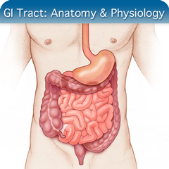 Online Ultrasound Course for GI Tract: Anatomy & Physiology Module