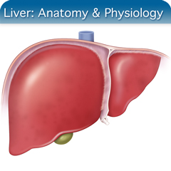 Online Ultrasound Course for Liver: Anatomy & Physiology Module