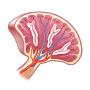 Spleen Ultrasound Course