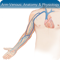 Online Ultrasound Course for Arm-Venous: Anatomy & Physiology Module