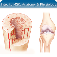 Online Ultrasound Course for Introduction to MSK: Anatomy & Physiology Module