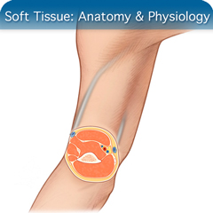 Online Ultrasound Course for Soft Tissue: Anatomy & Physiology Module