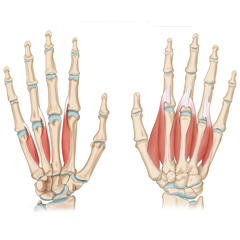 Hand & Finger Ultraschallkurs