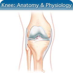 Online Ultrasound Course for Knee: Anatomy & Physiology Module