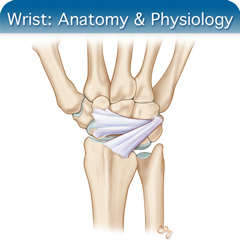 Online Ultrasound Course for Wrist: Anatomy & Physiology Module
