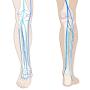 Cours d'échographie veineuse des jambes