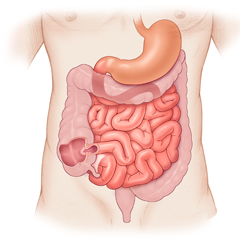 الجهاز الهضمي: وحدة التشريح وعلم وظائف الأعضاء