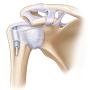SonoSim Schulter Anatomie & Physiologie Modulle