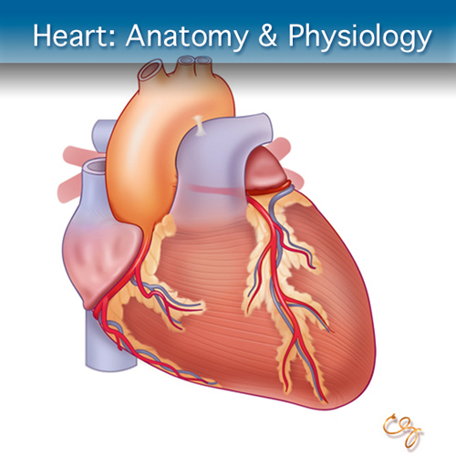 Online Ultrasound Course for Heart: Anatomy & Physiology Module