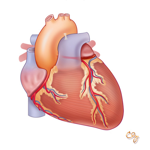 Heart: Anatomy and Physiology Module