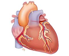Casi di rianimazione cardiaca