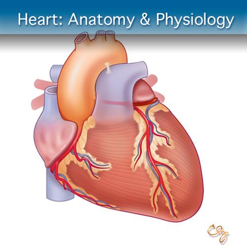 Heart Anatomy Ultrasound Course