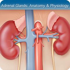 Adrenal Glands Ultrasound Course