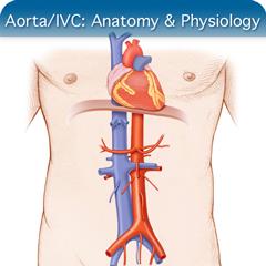 Aorta IVC Course