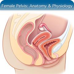 Female Pelvis Ultrasound Course