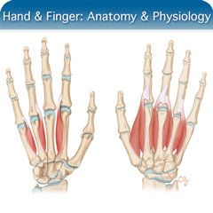 Hand & Finger Ultrasound Course