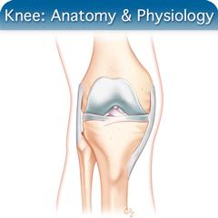 Knee Ultrasound Course