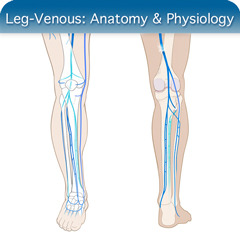 Leg Venous Ultrasound Course