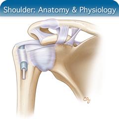 Shoulder Anatomy Ultrasound Course