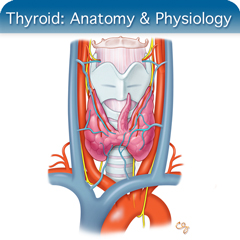 Thyroid Ultrasound Course