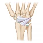Wrist Ultrasound Course