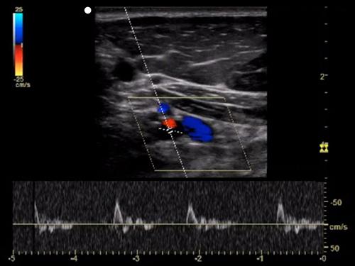 Medical School ultrasound