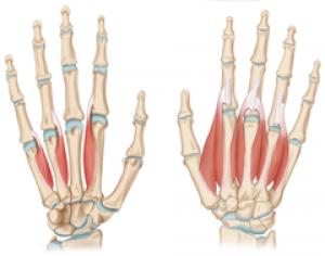 Hand & Finger