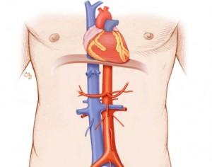 Aorta/IVC